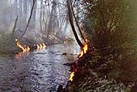 Img Creekonfire